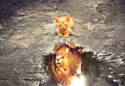 Leandro_De_Carvalho-PixaBay-cat-3809563_